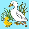 Thumbnail image for Two Cute Ducks Coloring