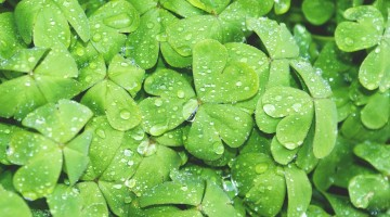 Four Fun, Fabulous Ideas for St. Patrick's Day Bulletin Boards