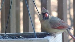 Bird Feeder at Home