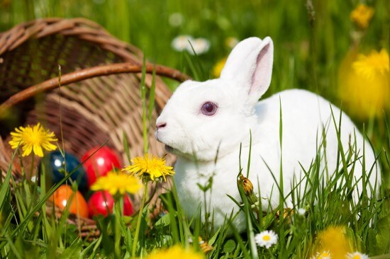 Easter bunny on a beautiful spring meadow with dandelions in fro