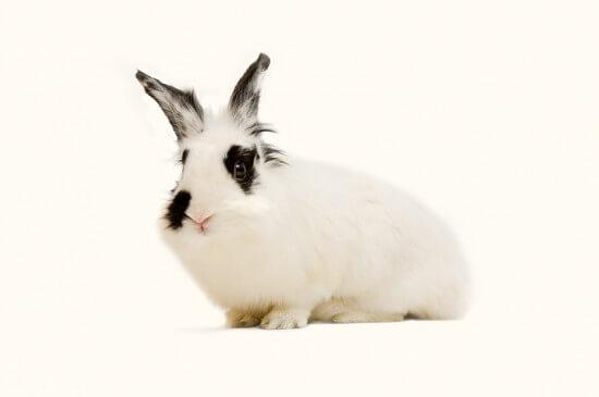 BunnyEaster