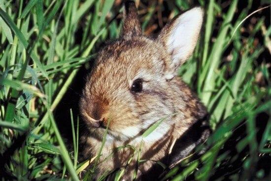 LittleRabbit