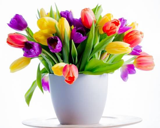 Spring flowers,  tulips - Colorful fresh spring tulips flowers i