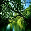 RIVER IN THE FOREST IMAGE PUZZLE