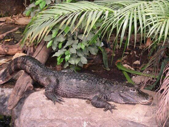 10 Fun Facts about Alligators