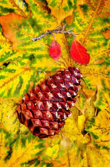 Pine Cone Photo Holder