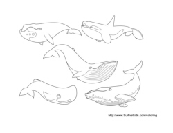 5 Kinds of Whales