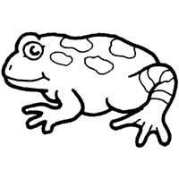 Bumpy Toad