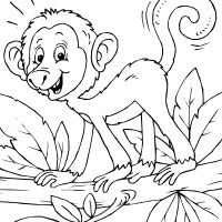Curly Tail Monkey