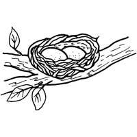 bird eggs coloring pages - photo#10
