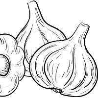 Garlic Heads