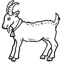 Hungry Billy Goat