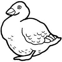 Noisy Goose