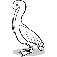 Perching Pelican
