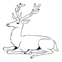 Resting Stag