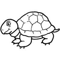 Turtle Coloring Pages Surfnetkids