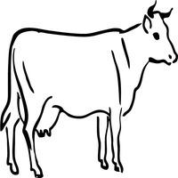 Stoic Cow