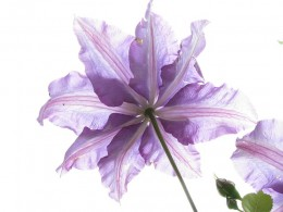 Tween Crafty Flower Pens