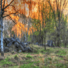 Black River State Forest Jigsaw