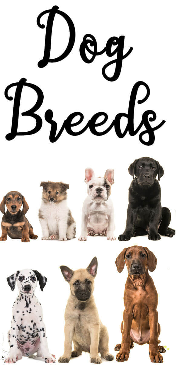 #Dogs have been cross-bred for thousands of years, resulting in a hundreds of breeds.