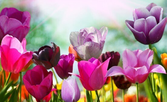 Flowers That Mean Love: Your Online Glossary of Floral Definitions